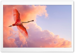 Pink Bird Flying HD Wide Wallpaper for Widescreen