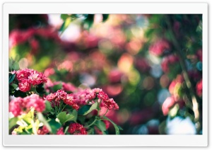 Pink Blossom And Green Bokeh HD Wide Wallpaper for Widescreen