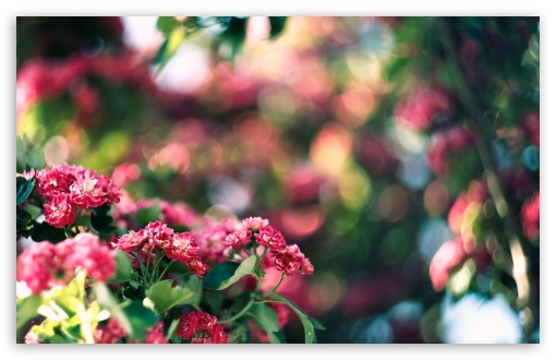 Pink Blossom And Green Bokeh HD wallpaper for Wide 16:10 5:3 Widescreen WHXGA WQXGA WUXGA WXGA WGA ; HD 16:9 High Definition WQHD QWXGA 1080p 900p 720p QHD nHD ; Standard 4:3 5:4 3:2 Fullscreen UXGA XGA SVGA QSXGA SXGA DVGA HVGA HQVGA devices ( Apple PowerBook G4 iPhone 4 3G 3GS iPod Touch ) ; Tablet 1:1 ; iPad 1/2/Mini ; Mobile 4:3 5:3 3:2 16:9 5:4 - UXGA XGA SVGA WGA DVGA HVGA HQVGA devices ( Apple PowerBook G4 iPhone 4 3G 3GS iPod Touch ) WQHD QWXGA 1080p 900p 720p QHD nHD QSXGA SXGA ; Dual 16:10 5:3 16:9 4:3 5:4 WHXGA WQXGA WUXGA WXGA WGA WQHD QWXGA 1080p 900p 720p QHD nHD UXGA XGA SVGA QSXGA SXGA ;