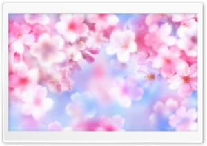 Pink Blossom Background HD Wide Wallpaper for Widescreen