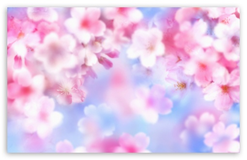 Pink Blossom Background HD wallpaper for Wide 16:10 5:3 Widescreen WHXGA WQXGA WUXGA WXGA WGA ; HD 16:9 High Definition WQHD QWXGA 1080p 900p 720p QHD nHD ; Standard 4:3 5:4 3:2 Fullscreen UXGA XGA SVGA QSXGA SXGA DVGA HVGA HQVGA devices ( Apple PowerBook G4 iPhone 4 3G 3GS iPod Touch ) ; Tablet 1:1 ; iPad 1/2/Mini ; Mobile 4:3 5:3 3:2 16:9 5:4 - UXGA XGA SVGA WGA DVGA HVGA HQVGA devices ( Apple PowerBook G4 iPhone 4 3G 3GS iPod Touch ) WQHD QWXGA 1080p 900p 720p QHD nHD QSXGA SXGA ; Dual 16:10 5:4 WHXGA WQXGA WUXGA WXGA QSXGA SXGA ;