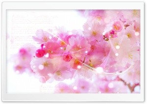 Pink Blossom Flowers HD Wide Wallpaper for Widescreen