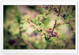 Pink Branches HD Wide Wallpaper for Widescreen