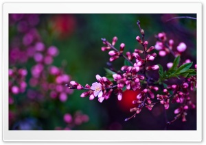 Pink Buds HD Wide Wallpaper for Widescreen