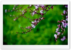 Pink Buds, Bokeh HD Wide Wallpaper for Widescreen