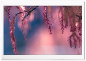 Pink Conifer Tree Branch HD Wide Wallpaper for 4K UHD Widescreen desktop & smartphone