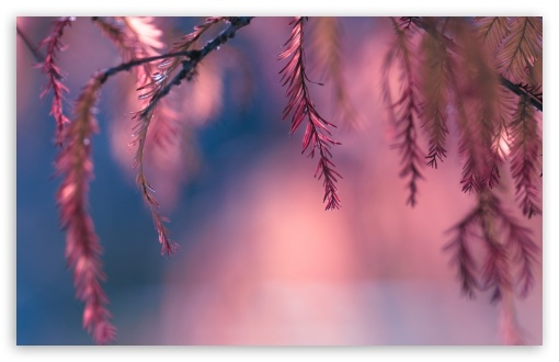 Pink Conifer Tree Branch ❤ 4K UHD Wallpaper for Wide 16:10 5:3 Widescreen WHXGA WQXGA WUXGA WXGA WGA ; 4K UHD 16:9 Ultra High Definition 2160p 1440p 1080p 900p 720p ; Standard 4:3 5:4 3:2 Fullscreen UXGA XGA SVGA QSXGA SXGA DVGA HVGA HQVGA ( Apple PowerBook G4 iPhone 4 3G 3GS iPod Touch ) ; Tablet 1:1 ; iPad 1/2/Mini ; Mobile 4:3 5:3 3:2 16:9 5:4 - UXGA XGA SVGA WGA DVGA HVGA HQVGA ( Apple PowerBook G4 iPhone 4 3G 3GS iPod Touch ) 2160p 1440p 1080p 900p 720p QSXGA SXGA ; Dual 4:3 5:4 UXGA XGA SVGA QSXGA SXGA ;