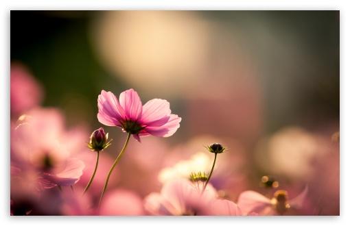 Wallpaper Hd Widescreen High Quality Desktop Flower Flowers Healthy