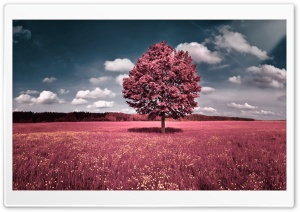 Pink Field HD Wide Wallpaper for Widescreen