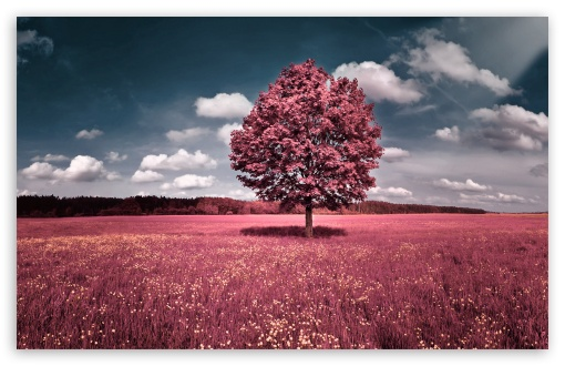 Pink Field HD wallpaper for Standard 4:3 5:4 Fullscreen UXGA XGA SVGA QSXGA SXGA ; Wide 16:10 5:3 Widescreen WHXGA WQXGA WUXGA WXGA WGA ; HD 16:9 High Definition WQHD QWXGA 1080p 900p 720p QHD nHD ; Other 3:2 DVGA HVGA HQVGA devices ( Apple PowerBook G4 iPhone 4 3G 3GS iPod Touch ) ; Mobile VGA WVGA iPhone iPad PSP Phone - VGA QVGA Smartphone ( PocketPC GPS iPod Zune BlackBerry HTC Samsung LG Nokia Eten Asus ) WVGA WQVGA Smartphone ( HTC Samsung Sony Ericsson LG Vertu MIO ) HVGA Smartphone ( Apple iPhone iPod BlackBerry HTC Samsung Nokia ) Sony PSP Zune HD Zen ; Tablet 2 ;