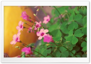 Pink Flower Ultra HD Wallpaper for 4K UHD Widescreen desktop, tablet & smartphone