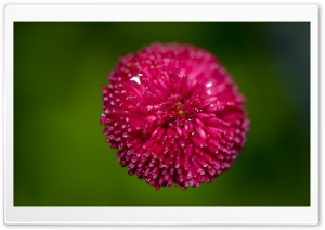 Pink Flower Against A Green Background HD Wide Wallpaper for Widescreen