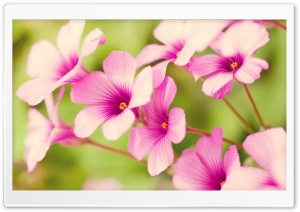 Pink Flower Petals HD Wide Wallpaper for Widescreen