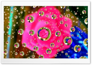 Pink Flower Water Drop Reflection HD Wide Wallpaper for Widescreen