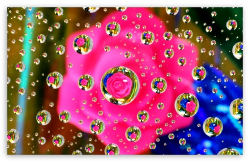 Pink Flower Water Drop Reflection ❤ 4K UHD Wallpaper for Wide 16:10 5:3 Widescreen WHXGA WQXGA WUXGA WXGA WGA ; 4K UHD 16:9 Ultra High Definition 2160p 1440p 1080p 900p 720p ; UHD 16:9 2160p 1440p 1080p 900p 720p ; Standard 4:3 5:4 3:2 Fullscreen UXGA XGA SVGA QSXGA SXGA DVGA HVGA HQVGA ( Apple PowerBook G4 iPhone 4 3G 3GS iPod Touch ) ; Smartphone 5:3 WGA ; Tablet 1:1 ; iPad 1/2/Mini ; Mobile 4:3 5:3 3:2 16:9 5:4 - UXGA XGA SVGA WGA DVGA HVGA HQVGA ( Apple PowerBook G4 iPhone 4 3G 3GS iPod Touch ) 2160p 1440p 1080p 900p 720p QSXGA SXGA ;