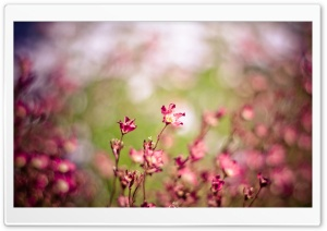 Pink Flowers, Bokeh HD Wide Wallpaper for Widescreen