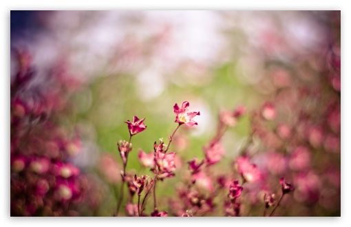 Pink Flowers, Bokeh HD wallpaper for Wide 16:10 5:3 Widescreen WHXGA WQXGA WUXGA WXGA WGA ; HD 16:9 High Definition WQHD QWXGA 1080p 900p 720p QHD nHD ; Standard 4:3 5:4 3:2 Fullscreen UXGA XGA SVGA QSXGA SXGA DVGA HVGA HQVGA devices ( Apple PowerBook G4 iPhone 4 3G 3GS iPod Touch ) ; Tablet 1:1 ; iPad 1/2/Mini ; Mobile 4:3 5:3 3:2 16:9 5:4 - UXGA XGA SVGA WGA DVGA HVGA HQVGA devices ( Apple PowerBook G4 iPhone 4 3G 3GS iPod Touch ) WQHD QWXGA 1080p 900p 720p QHD nHD QSXGA SXGA ; Dual 16:10 5:3 16:9 4:3 5:4 WHXGA WQXGA WUXGA WXGA WGA WQHD QWXGA 1080p 900p 720p QHD nHD UXGA XGA SVGA QSXGA SXGA ;