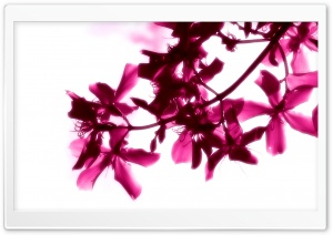 Pink Flowers On White Background HD Wide Wallpaper for Widescreen