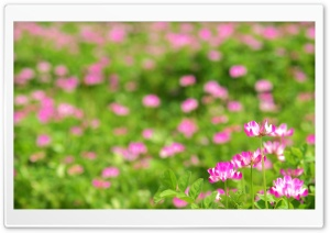 Pink Flowers Photo HD Wide Wallpaper for Widescreen