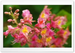 Pink Flowers Spring HD Wide Wallpaper for Widescreen