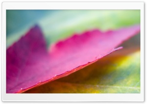 Pink Leaf HD Wide Wallpaper for Widescreen