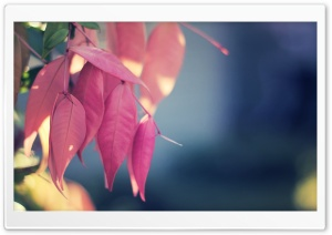 Pink Leaves Close Up HD Wide Wallpaper for Widescreen