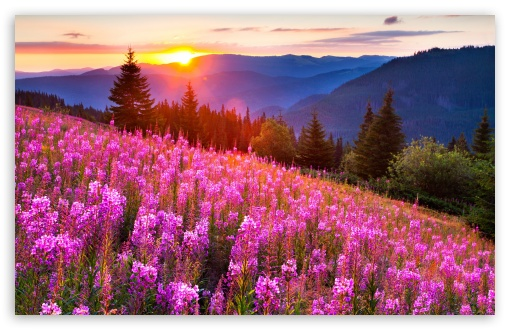Pink Meadow Sun ❤ 4K UHD Wallpaper for Wide 16:10 5:3 Widescreen WHXGA WQXGA WUXGA WXGA WGA ; 4K UHD 16:9 Ultra High Definition 2160p 1440p 1080p 900p 720p ; Standard 4:3 5:4 3:2 Fullscreen UXGA XGA SVGA QSXGA SXGA DVGA HVGA HQVGA ( Apple PowerBook G4 iPhone 4 3G 3GS iPod Touch ) ; Smartphone 5:3 WGA ; Tablet 1:1 ; iPad 1/2/Mini ; Mobile 4:3 5:3 3:2 16:9 5:4 - UXGA XGA SVGA WGA DVGA HVGA HQVGA ( Apple PowerBook G4 iPhone 4 3G 3GS iPod Touch ) 2160p 1440p 1080p 900p 720p QSXGA SXGA ; Dual 16:10 5:3 16:9 4:3 5:4 WHXGA WQXGA WUXGA WXGA WGA 2160p 1440p 1080p 900p 720p UXGA XGA SVGA QSXGA SXGA ;