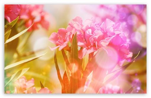 Pink Oleander Flowers ❤ 4K UHD Wallpaper for Wide 16:10 5:3 Widescreen WHXGA WQXGA WUXGA WXGA WGA ; 4K UHD 16:9 Ultra High Definition 2160p 1440p 1080p 900p 720p ; Standard 4:3 5:4 3:2 Fullscreen UXGA XGA SVGA QSXGA SXGA DVGA HVGA HQVGA ( Apple PowerBook G4 iPhone 4 3G 3GS iPod Touch ) ; Smartphone 5:3 WGA ; Tablet 1:1 ; iPad 1/2/Mini ; Mobile 4:3 5:3 3:2 16:9 5:4 - UXGA XGA SVGA WGA DVGA HVGA HQVGA ( Apple PowerBook G4 iPhone 4 3G 3GS iPod Touch ) 2160p 1440p 1080p 900p 720p QSXGA SXGA ; Dual 16:10 5:3 16:9 4:3 5:4 WHXGA WQXGA WUXGA WXGA WGA 2160p 1440p 1080p 900p 720p UXGA XGA SVGA QSXGA SXGA ;