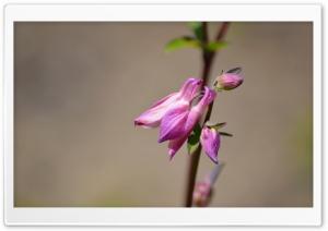 Pink Partial Blooms Ultra HD Wallpaper for 4K UHD Widescreen desktop, tablet & smartphone