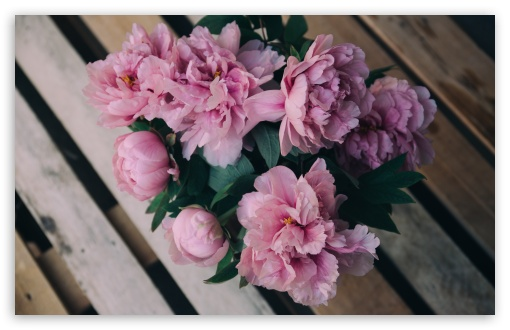 Download Pink Peonies Flowers in Vase HD Wallpaper