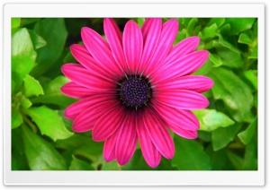 Pink Princess Ultra HD Wallpaper for 4K UHD Widescreen desktop, tablet & smartphone