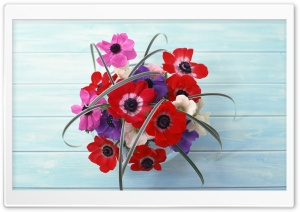 Pink, Purple And Red Poppies HD Wide Wallpaper for Widescreen