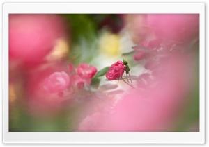Pink Roses Ultra HD Wallpaper for 4K UHD Widescreen desktop, tablet & smartphone