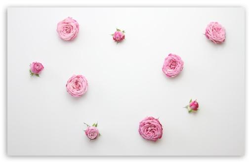Download Pink Roses Arrangement HD Wallpaper