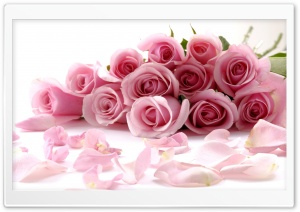 Pink Roses Bouquet HD Wide Wallpaper for Widescreen