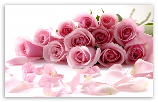 Pink Roses Bouquet HD wallpaper for Wide 16:10 5:3 Widescreen WHXGA WQXGA WUXGA WXGA WGA ; HD 16:9 High Definition WQHD QWXGA 1080p 900p 720p QHD nHD ; Standard 4:3 5:4 3:2 Fullscreen UXGA XGA SVGA QSXGA SXGA DVGA HVGA HQVGA devices ( Apple PowerBook G4 iPhone 4 3G 3GS iPod Touch ) ; Tablet 1:1 ; iPad 1/2/Mini ; Mobile 4:3 5:3 3:2 16:9 5:4 - UXGA XGA SVGA WGA DVGA HVGA HQVGA devices ( Apple PowerBook G4 iPhone 4 3G 3GS iPod Touch ) WQHD QWXGA 1080p 900p 720p QHD nHD QSXGA SXGA ; Dual 16:10 5:3 16:9 4:3 5:4 WHXGA WQXGA WUXGA WXGA WGA WQHD QWXGA 1080p 900p 720p QHD nHD UXGA XGA SVGA QSXGA SXGA ;