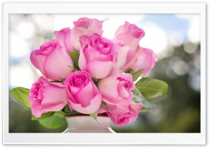 Pink Roses Buds HD Wide Wallpaper for Widescreen