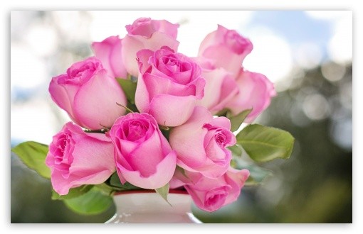 pink roses buds wallpapers