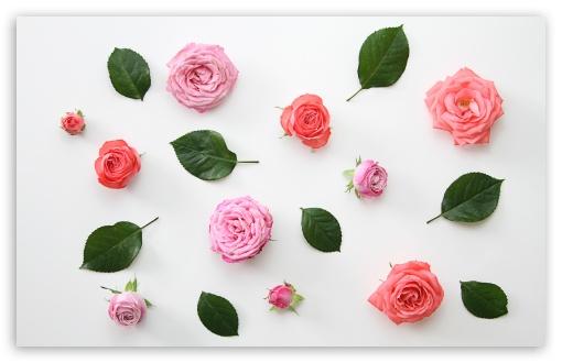 Pink Roses Flowers Design ❤ 4K UHD Wallpaper for Wide 16:10 5:3 Widescreen WHXGA WQXGA WUXGA WXGA WGA ; UltraWide 21:9 24:10 ; 4K UHD 16:9 Ultra High Definition 2160p 1440p 1080p 900p 720p ; UHD 16:9 2160p 1440p 1080p 900p 720p ; Standard 4:3 5:4 3:2 Fullscreen UXGA XGA SVGA QSXGA SXGA DVGA HVGA HQVGA ( Apple PowerBook G4 iPhone 4 3G 3GS iPod Touch ) ; Smartphone 16:9 3:2 5:3 2160p 1440p 1080p 900p 720p DVGA HVGA HQVGA ( Apple PowerBook G4 iPhone 4 3G 3GS iPod Touch ) WGA ; Tablet 1:1 ; iPad 1/2/Mini ; Mobile 4:3 5:3 3:2 16:9 5:4 - UXGA XGA SVGA WGA DVGA HVGA HQVGA ( Apple PowerBook G4 iPhone 4 3G 3GS iPod Touch ) 2160p 1440p 1080p 900p 720p QSXGA SXGA ; Dual 16:10 5:3 16:9 4:3 5:4 3:2 WHXGA WQXGA WUXGA WXGA WGA 2160p 1440p 1080p 900p 720p UXGA XGA SVGA QSXGA SXGA DVGA HVGA HQVGA ( Apple PowerBook G4 iPhone 4 3G 3GS iPod Touch ) ; Triple 16:10 5:3 16:9 4:3 5:4 3:2 WHXGA WQXGA WUXGA WXGA WGA 2160p 1440p 1080p 900p 720p UXGA XGA SVGA QSXGA SXGA DVGA HVGA HQVGA ( Apple PowerBook G4 iPhone 4 3G 3GS iPod Touch ) ;