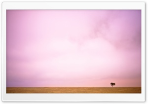 Pink Sky And Lone Tree HD Wide Wallpaper for Widescreen