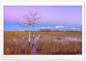 Pink Sunset, Wetlands, Everglades National Park HD Wide Wallpaper for Widescreen