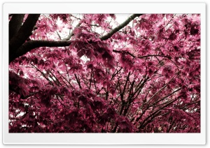 Pink Tree HD Wide Wallpaper for Widescreen