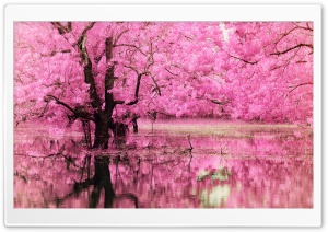 Pink Trees Reflected in Water HD Wide Wallpaper for Widescreen