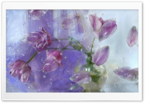Pink Tulips Through A Window HD Wide Wallpaper for Widescreen