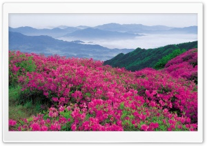 Pink Wildflowers HD Wide Wallpaper for Widescreen