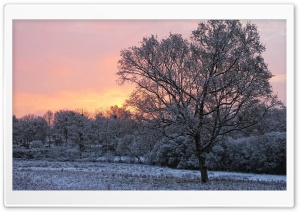 Pink Winter Sky HD Wide Wallpaper for Widescreen