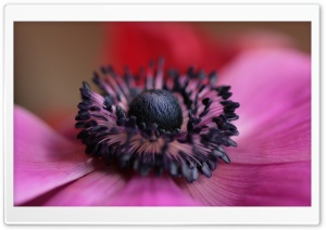 Pistil And Stamens Macro HD Wide Wallpaper for Widescreen