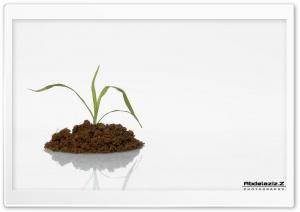 Plant Ultra HD Wallpaper for 4K UHD Widescreen desktop, tablet & smartphone