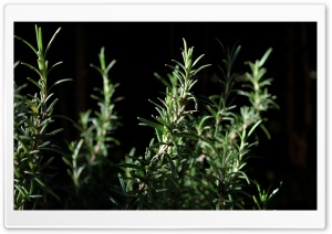 Plant HD Wide Wallpaper for Widescreen