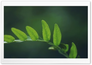 Plant Branch, Summer HD Wide Wallpaper for Widescreen